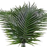 Buy Phoenix Palm Leaves online