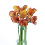 Orange Mini Calla Lilies