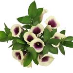 Bouquet Lilies Gerbera Daisies Germinis