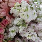 Roses Wedding Flower DIY Packages