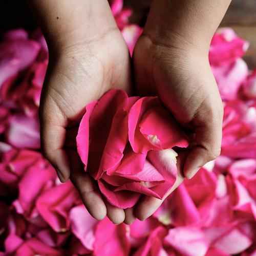 Pinky Purple Fresh Rose Petals