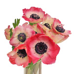 Anemone Hot Pink Flower