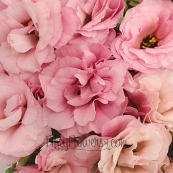 Light Pink Designer Lisianthus Flower for June to September Delivery