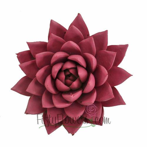 Pink Enhanced Succulent Flower