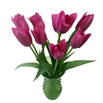 Dark Pink Tulip Flowers