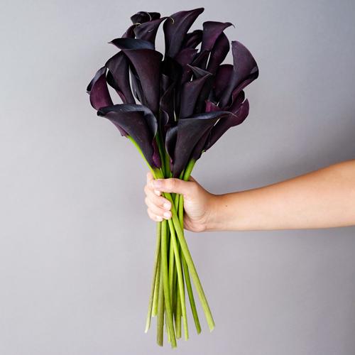 Burgundy Black Mini Calla Lily Flower