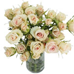 Porcelina Blush Pink Wholesale Roses In a vase