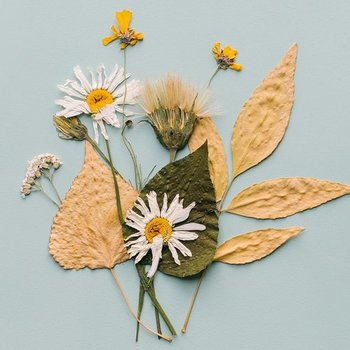 Choose Your Own Pressed Flower Kit