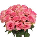 Fresh Cut Roses Hot Pink Priceless