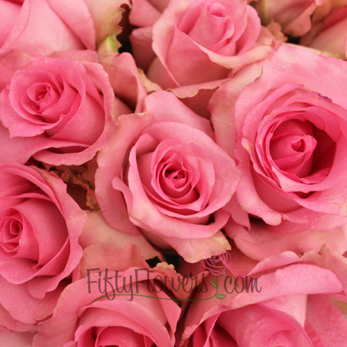 Priceless Pink Rose