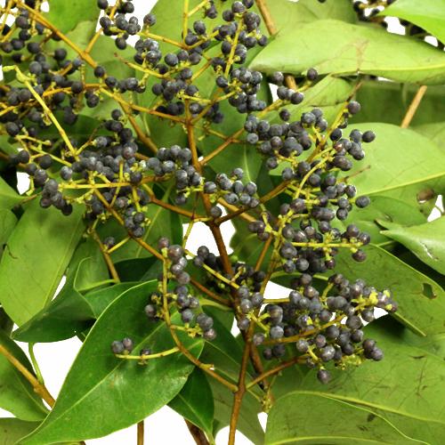 Wedding greenery privett berries wholesale fall greens filler flowers