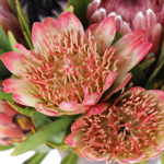 Tropical Flowers Assorted Proteas