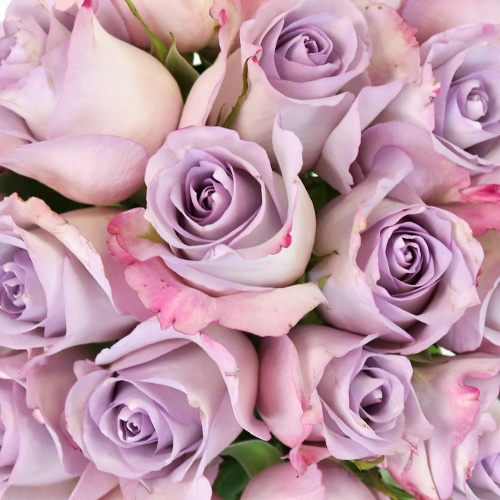 Purple Haze Sweetheart Roses