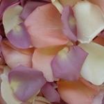 Mauve Real Rose Petals