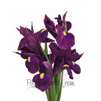 Iris Purple Fresh Flowers