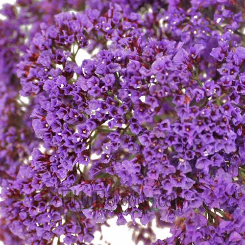 Purple Sea foam Statice Flower
