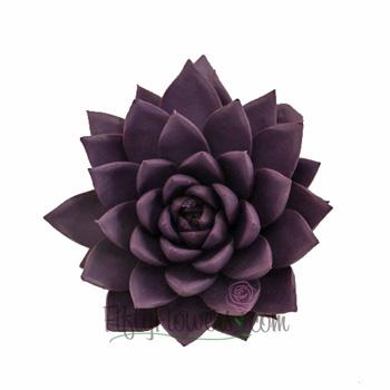 Grape Purple Enhanced Succulent Flower
