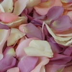 Wedding Fresh Rose Petals Wholesale