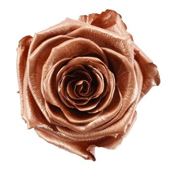 Preserved Rose Gold Rose