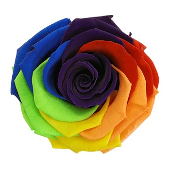 Preserved Rainbow Payaso Rose