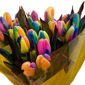 Neon Rainbow Tinted Tulips