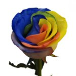 Rainbow Roses Multicolor Tinted
