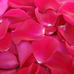 Raspberry Rose Petals Real