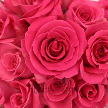 Ravel Hot Pink Rose