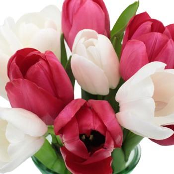 Valentine\'s Love Tulip Special
