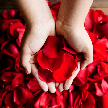 Red Rose Petals Wholesale