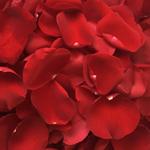 Buy Bulk Red Rose Petals