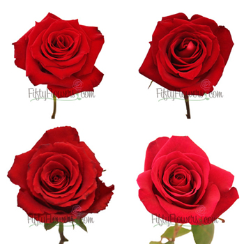 Red Roses for Valentine\'s Day