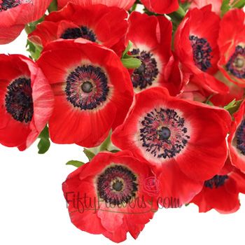 Red Fresh Cut Anemone Flower