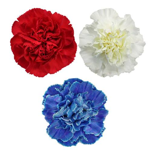 Red,White and Blue Carnation Combo Pack