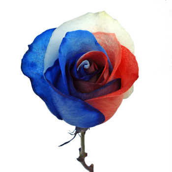ef5562315780 Patriotic Rainbow Roses Red, White and Blue