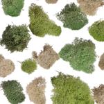 Spanish Moss - Buy Bulk FREE SHIPPING!