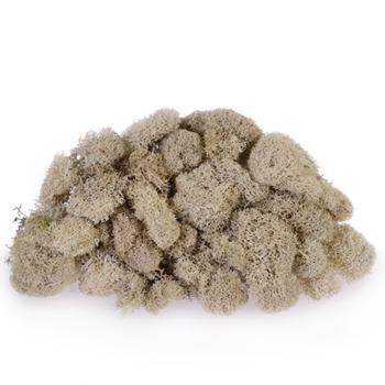 Natural Reindeer Moss