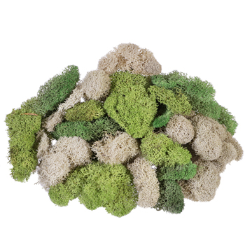 Assorted Reindeer Moss