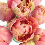 Princess Irene Standard Tulip
