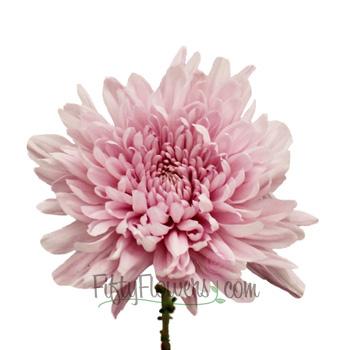 Football Mum Lavender Pink Flower