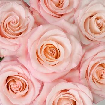 Cupcake Frosting Rose