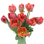 Roccoco Novelty Tulip Flower