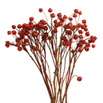 Bulk greenery red rose hips bunch for sale near me as delivery