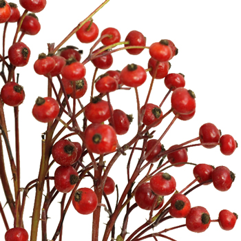 Wedding greenery red rose hips filler flowers sold near me
