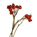 Single stem of fresh cut greens red rose hip filler flowers