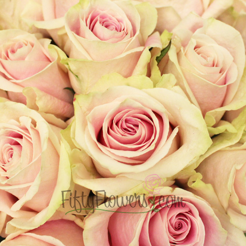 Rosita Vendela Antique Pink Rose