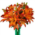 Red Asiatic Lily Flower