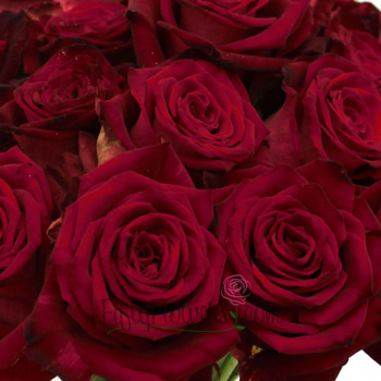 Ruby Red Velvet Sweetheart Rose
