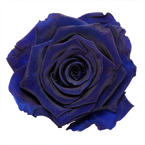 Preserved Simple Blue Rose