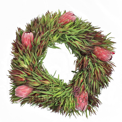 Safari and Pink Ice Protea Wreaths